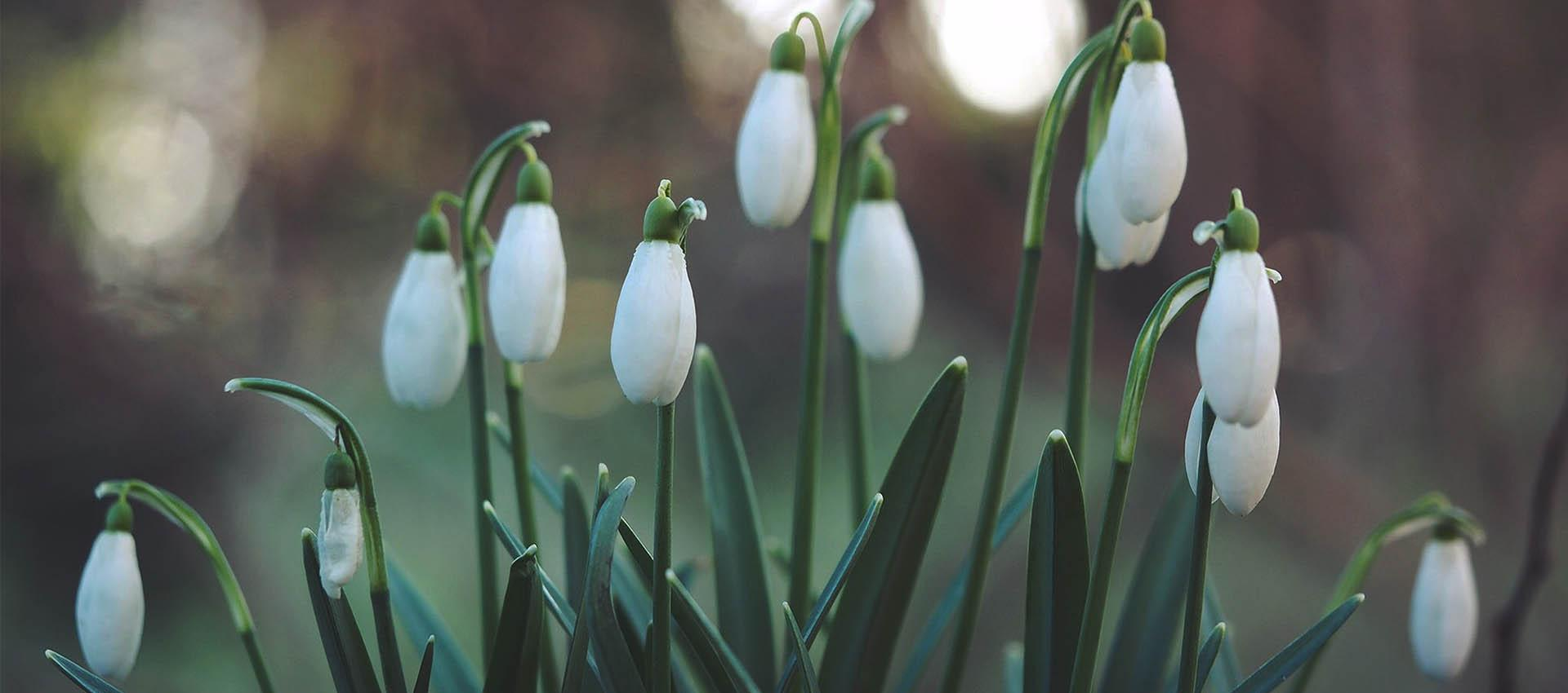 Powitajmy astronomiczną wiosnę!